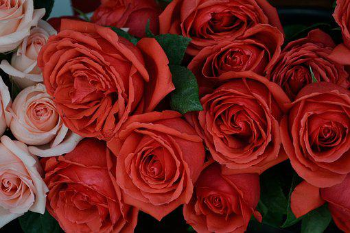 Roses, Flowers, Natural, Blossom, Nature, Floral, Plant