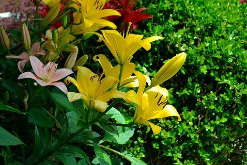 Yellow Flowers, Green, Pasture, Season, Summer, Flower