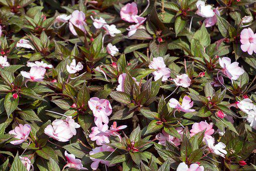 Exotic Flower, Garden, Flowers, Flower, Spring Flowers