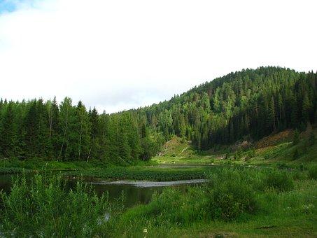 Forest, Mountain, Nature, Summer, Landscape, Green
