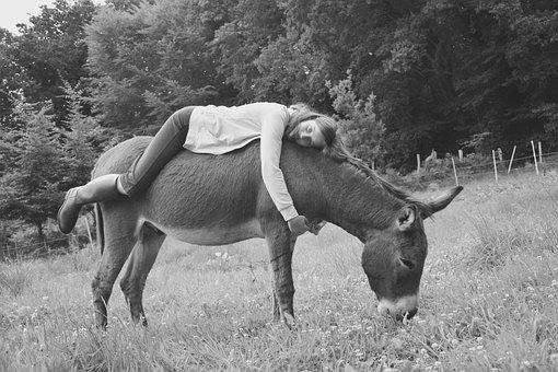 Donkey, Girl, Young Woman, Photo Black White, Back Ass