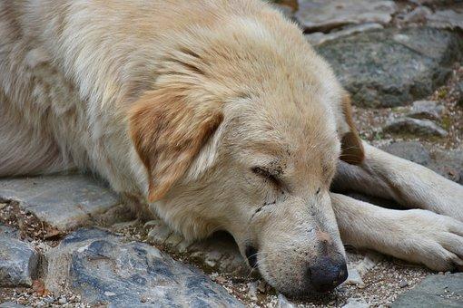 Dog, Street Dog, Portrait, Hybrid, Wildlife Photography