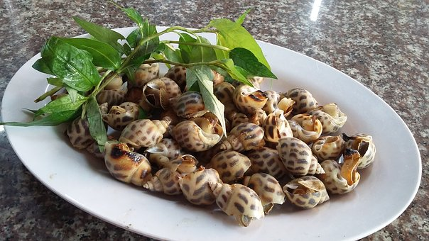Snail, Incense, Steamed
