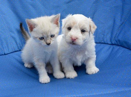 Puppy, Kitten, Dog Cat, Sweetness, Domestic Animal