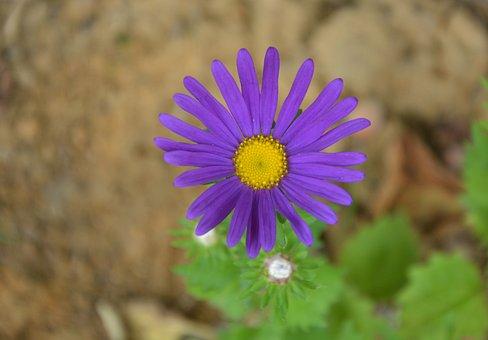 Flowers, Flower, Marguerite Purple, Bouquet, Nature