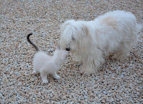 Dog Kitten, Meeting, Animals, Domestic Animal
