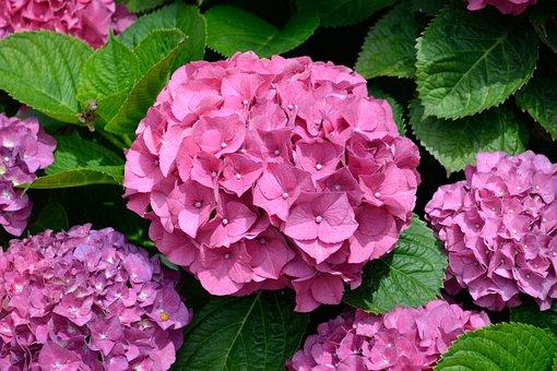 Purple Flower, Flowers, Garden, Close Up, Natural