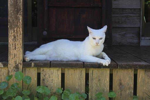 Cat, The White Temple, Okinawa Prefecture