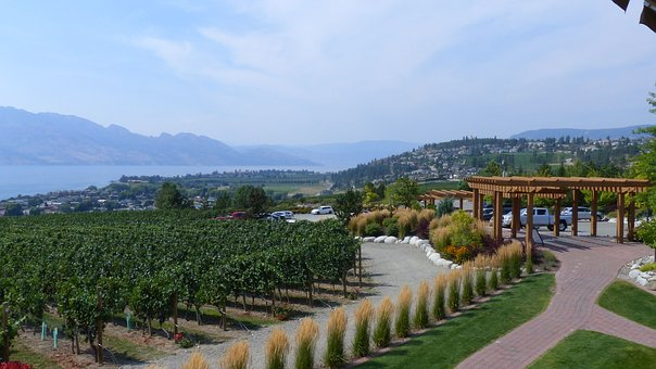 Winery In Bc, View To The Lake, The Path To Nowhere