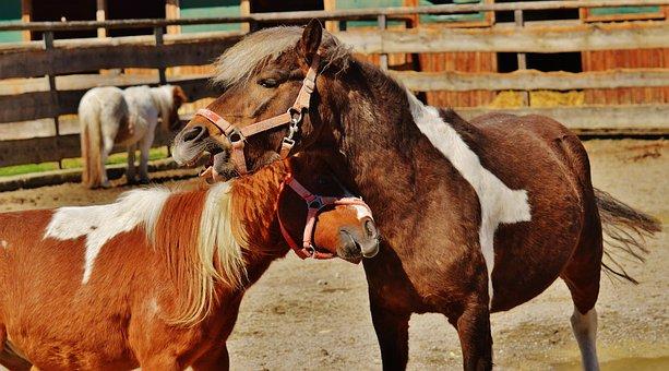 Horses, Pair, Smooch, Play, Funny, Animal, Seahorses