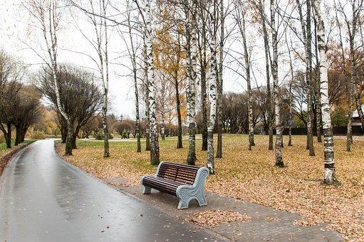 Autumn, Asphalt, Bench, Trees, Birch, Foliage