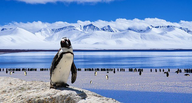 Ice, Penguin, Cold, Winter, Snow, Bird, Nature
