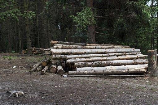 Logs, Balance Beam, Along, Felling, Dirt, Wood