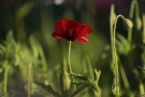 Mack, Flower, Summer Flowers, Nature, Flowers