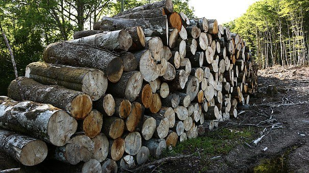 Heap, Wood, France, Cup, Sawn, Trees, Wood Pile, Forest