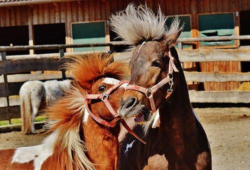 Horses, Play, Funny, Animal, Seahorses, Nature, Cute