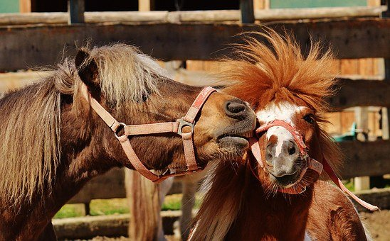 Horses, Play, Funny, Animal, Pony, Seahorses, Nature