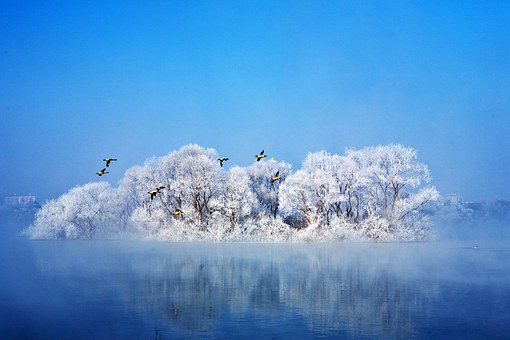 Winter, Migratory Birds, Lake, Sky, Landscape, Water