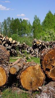 Log, Cutoffs Tree, Wood Industry, Felled Tree