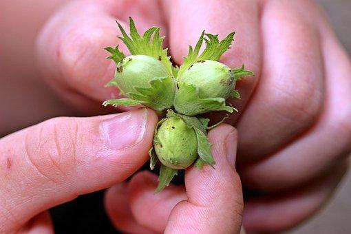 Nuts, Hazelnuts, Hands, Finger, Detention, Nut Cancel