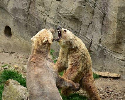 Bear, Predators, Mammals, Polar Bear, Bear Enclosure