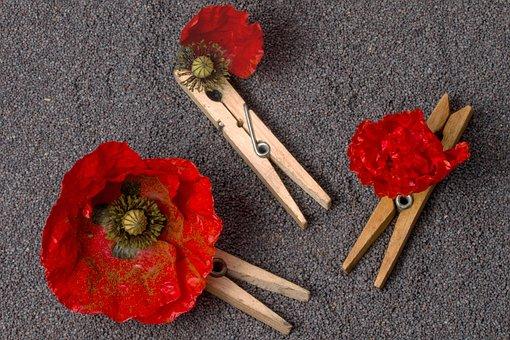 Poppy, Klatschmohn, Poppy Flower, Seeds, Poppy Seeds