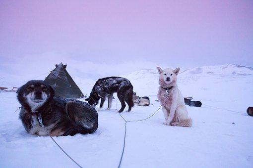 Husky, Adventure, Travel, Ice, Sled, Dunes, Picture