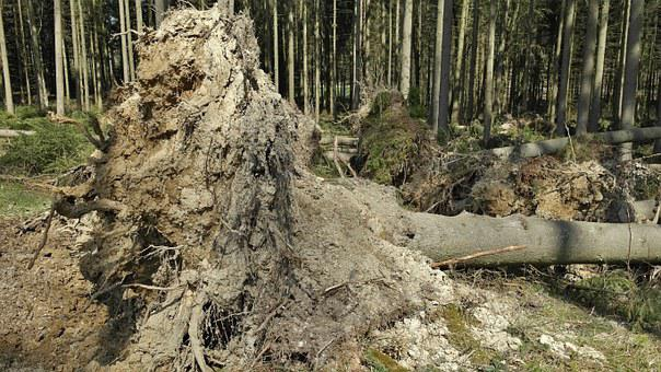 Forest, Environment, Nature, Storm Damage, Tree, Old