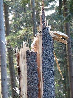 Storm Damage, Tree Damage, Canceled, Unwetterschaden