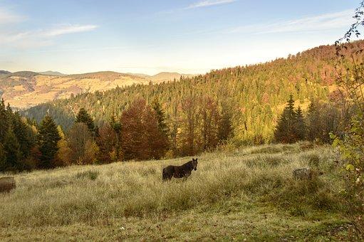 Autumn, Outdoor, Hill, Sunlight, Tree, Natural, Cloud