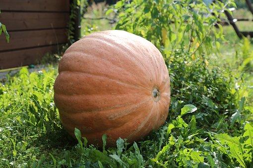 Autumn, Pumpkin, Fruit, Collections, The Sun