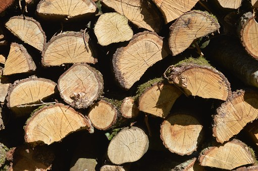 Wood, Cup, Trunk, Sawn, Tree, Tree Trunk, Forest, Bark