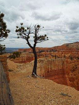 Tree, Bryce Canyon, Utah, Canyon, Bryce, National, Park