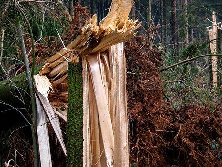 Forest, Forward, Damage, Overturned, Tree, Wood