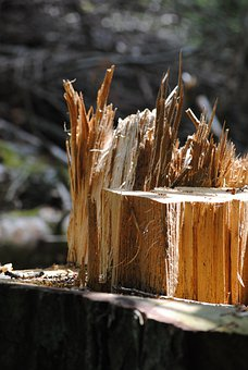Tree Trunk, Wood Splitter, Wood, Canceled