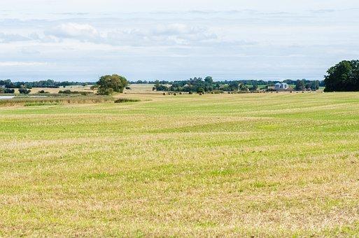 Field, Harvest, Agriculture, Farm, Rural, Farming