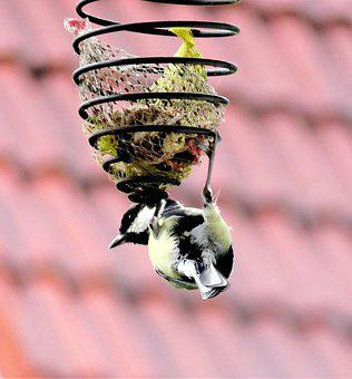 Bird, Tit, Songbird, In Search Of Food, Feed Spiral