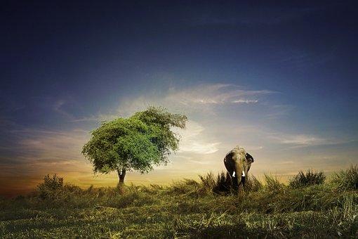 Elephant, Outdoor, Sky, Pretty, Tourists, Animals, City