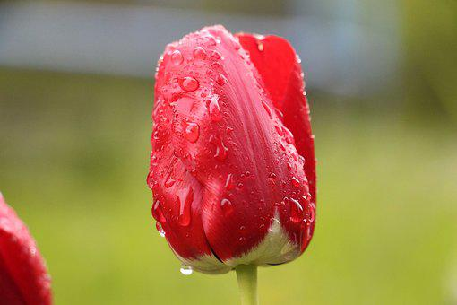 Flower, Red, Red Flower, Blossom, Bloom, Nature, Close