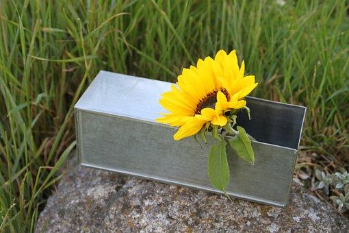 Containing, Zinc, Sunflower, Florist, Flower, Flowers