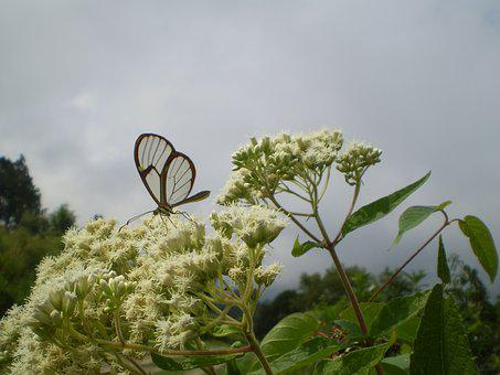Butterfly, Of Cristal, Transparent, Hostal, Sucking