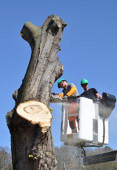 Trunk, Tree, Tree Trunk, Wood, Woodcutter, Shot, Sawn