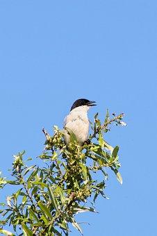 Animal, Wood, Wild Birds, Corvidae, The, Wild Animal