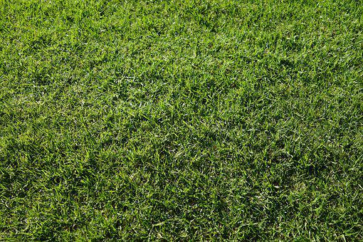 Green Grass, Abstract, Background, Decorative, Pattern