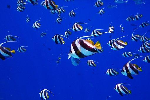 Fish, Sea, Water, Dive, Stripes, Blue, Aquarium