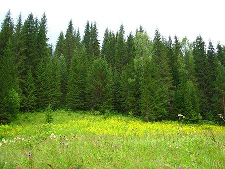 Forest, Nature, Summer, Landscape, Green, Beauty