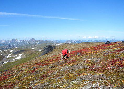 Mountains, Volcano, Mushrooms, Tundra, Autumn, Road