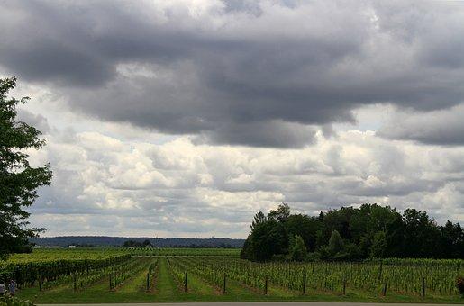 Vineyards, Grapes, Wine, Vine, Winery, Harvest, Fruit