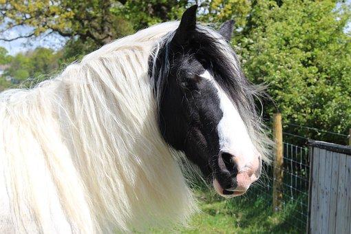 Shire, Horse, Otley, Show, Animal, Equine, Equestrian