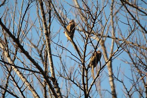Animal, Bird, Redfaced Mouse Birds, Pair, Tree